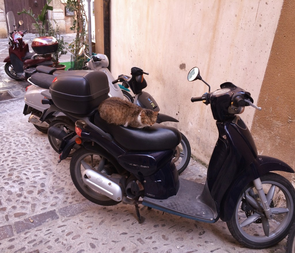 A cat relaxing in Cefalu, Sicily.